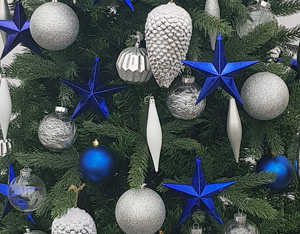 Valley Provincial, London Christmas Tree hire, London corporate landscaping, Christmas tree hire, office Christmas tree, corporate Christmas tree, corporate planting